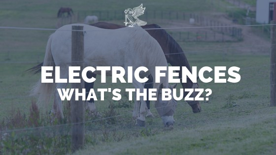 Electric Fences - Whats the buzz?