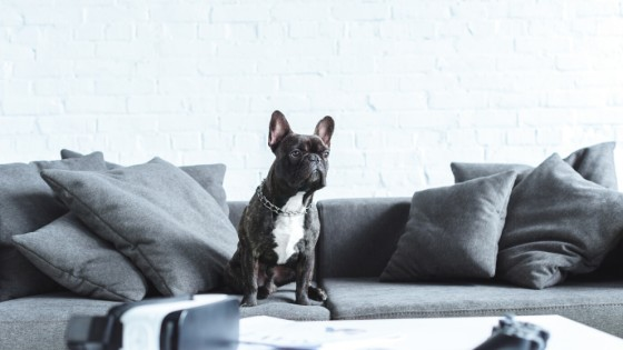 Renters Might Be Allowed Pets Under Proposed New Tenancy Rules
